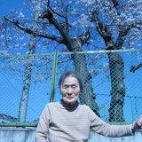 豊田様 桜