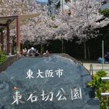 2019花見1.JPG