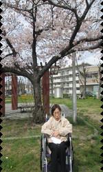 桜11.png