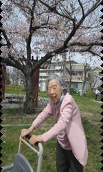 桜13.png