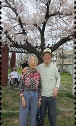 桜14.png