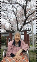 桜5.png