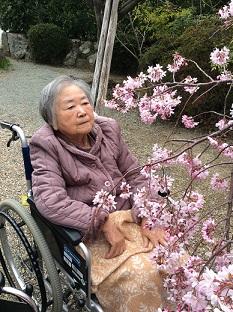 桜仁井.JPG