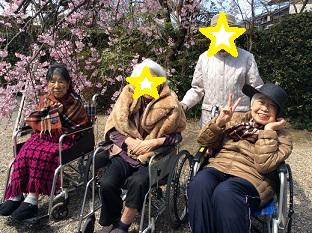 桜植田岡山.JPG