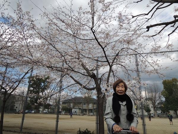 桜②.JPG
