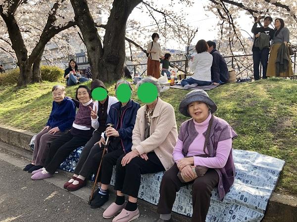 桜 ⑦.JPG