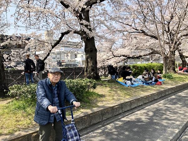 桜 8.JPG