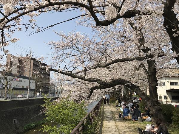 桜並木 ①.JPG