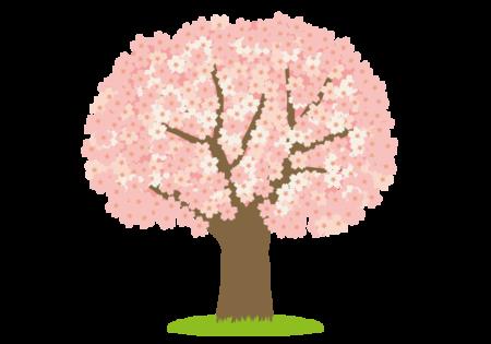 桜の木の無料イラスト.png