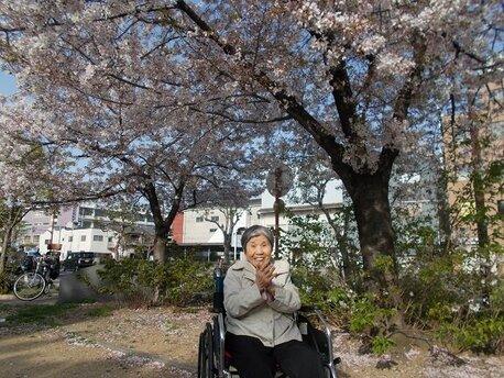 平島 桜.jpg
